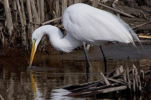 Manitoba Breeding Bird Atlas - Atlas des oiseaux nicheurs du